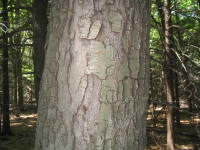 Jule_tree0002